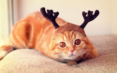 Cat with reindeer antlers wallpaper