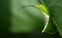 Caterpillar [2] wallpaper 1920x1200 jpg