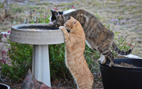 Cats drinking water from a fountain wallpaper 1920x1200 jpg