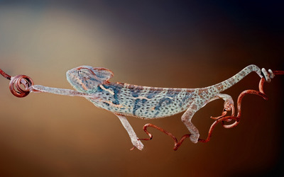 Chameleon [7] wallpaper