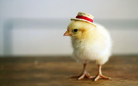 Chick with a hat wallpaper 1920x1200 jpg