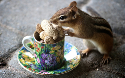 Chipmunk with a cup of nuts wallpaper