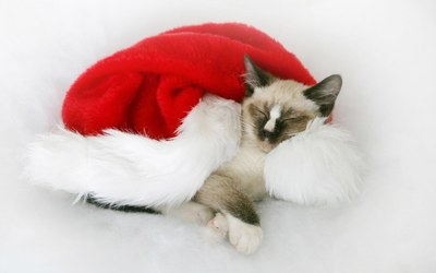 Christmas kitten wallpaper