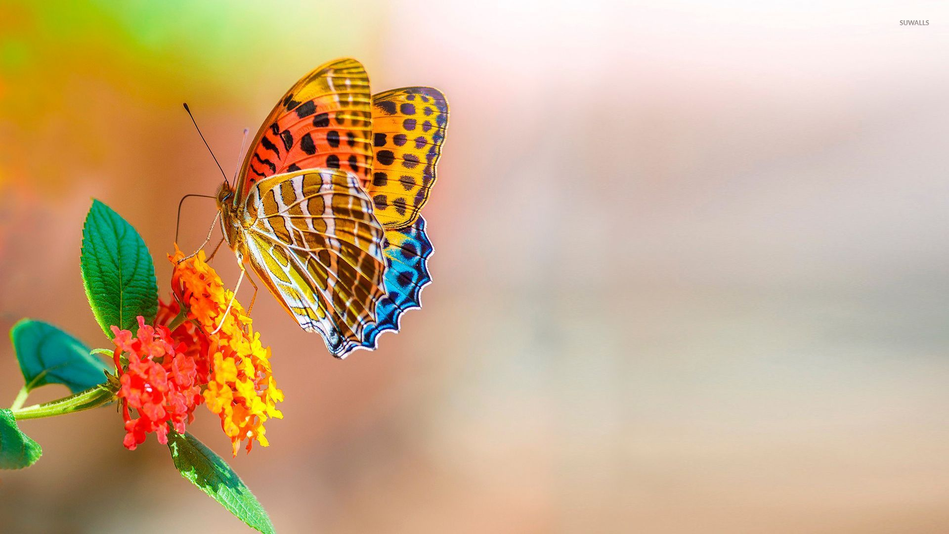 Colorful butterfly wallpaper - Animal wallpapers - #46510