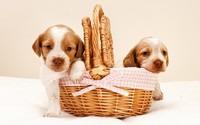 Couple of puppies in a basket wallpaper 1920x1200 jpg