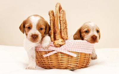 Couple of puppies in a basket wallpaper