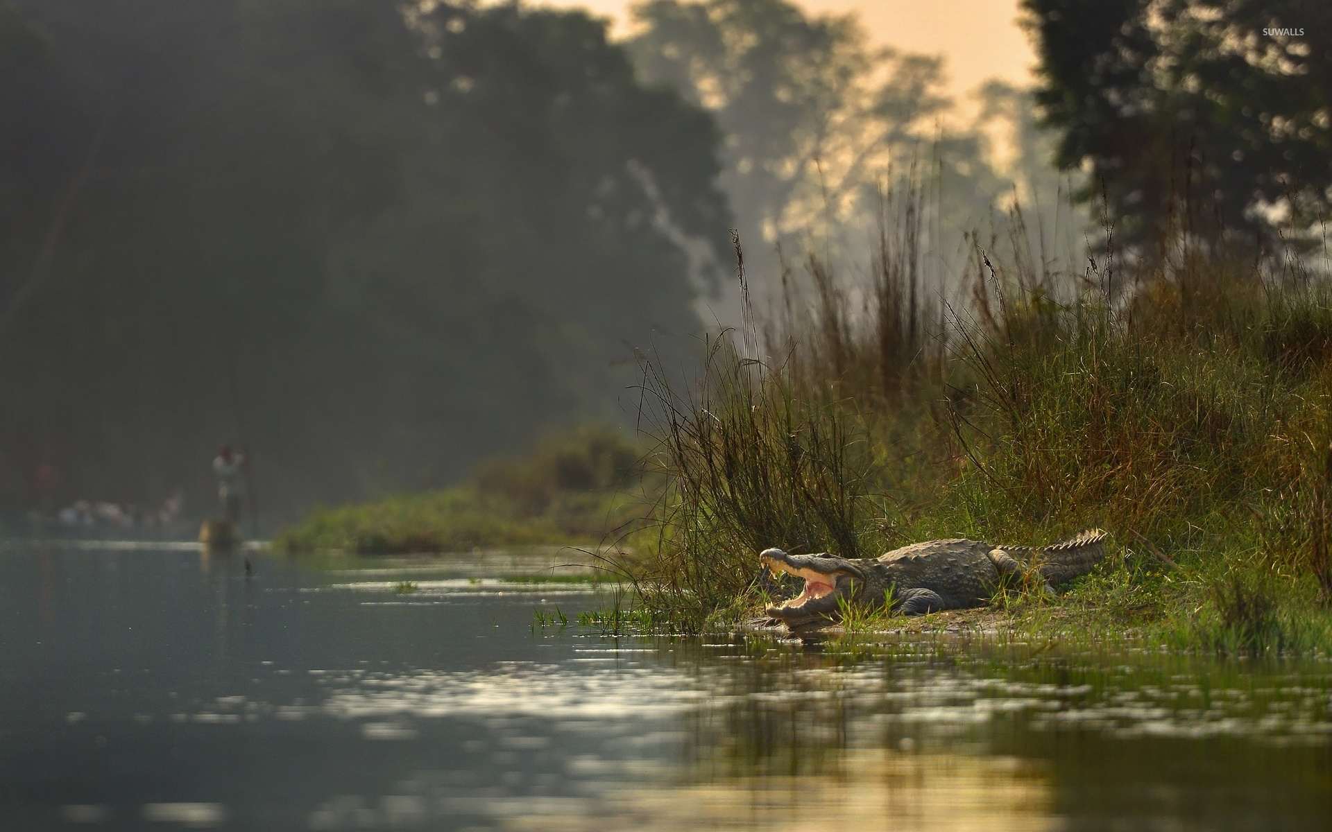 Crocodile [6] wallpaper - Animal wallpapers - #35032