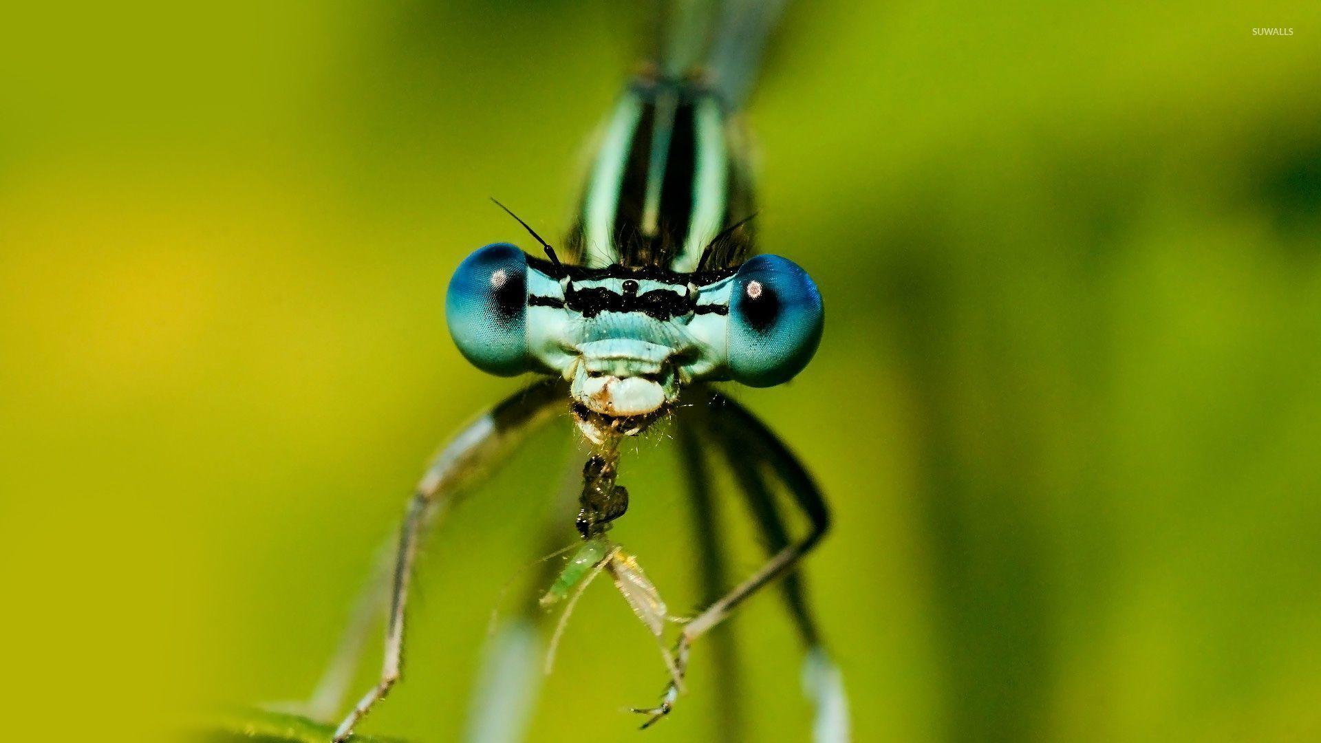 насекомое смотреть