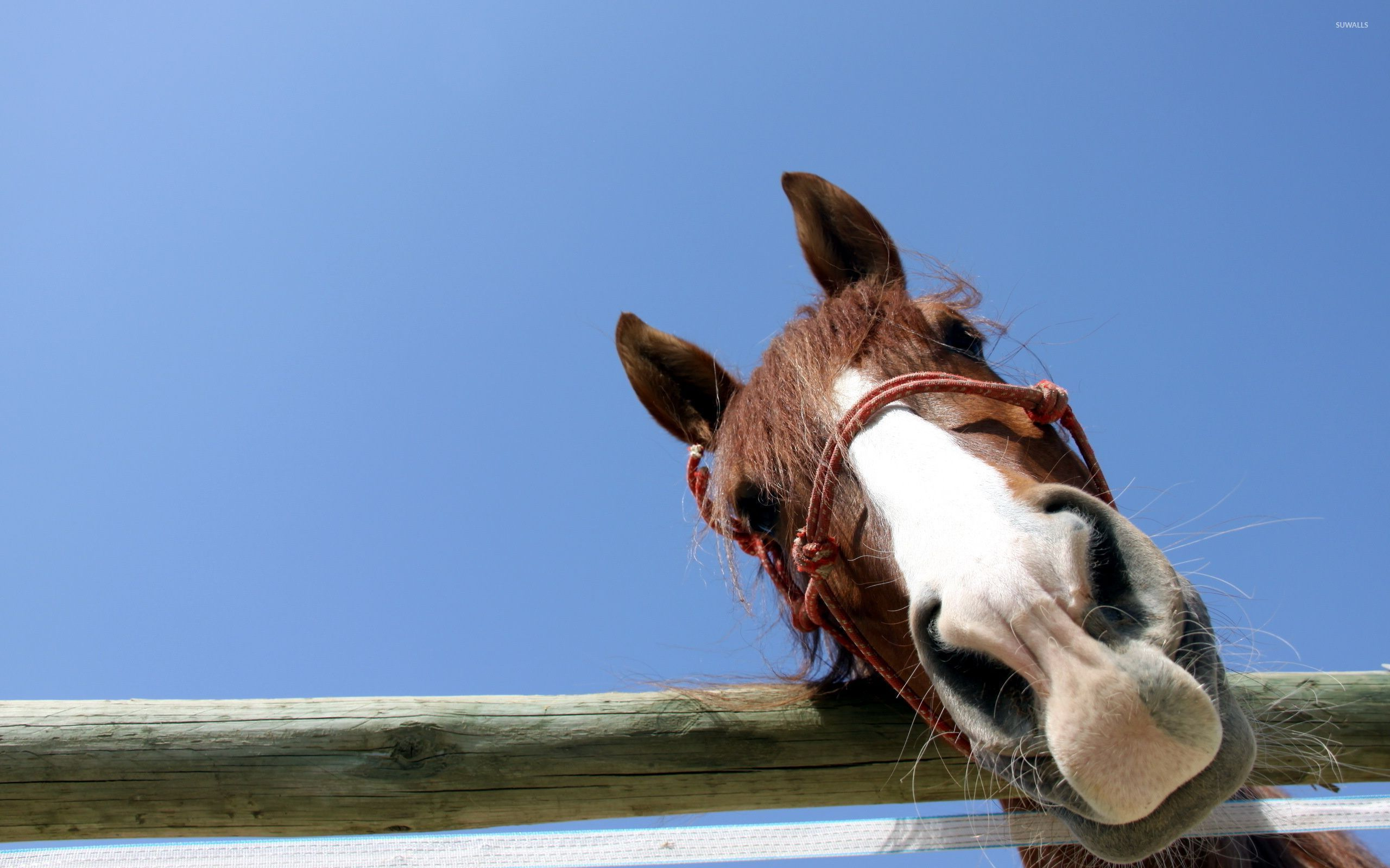 Curious horse wallpaper Animal wallpapers 49178