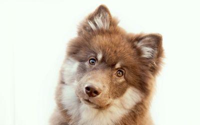 Curious pup wallpaper