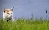 Cute cat [3] wallpaper 1920x1200 jpg