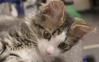 Cute cat wallpaper 3840x2160 jpg