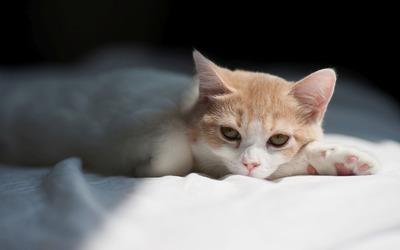 Cute cat resting wallpaper