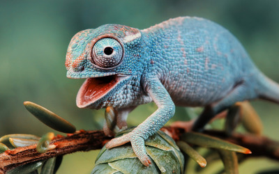 Cute chameleon wallpaper