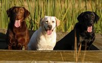 Cute dogs with tongue out in a boat wallpaper 1920x1080 jpg