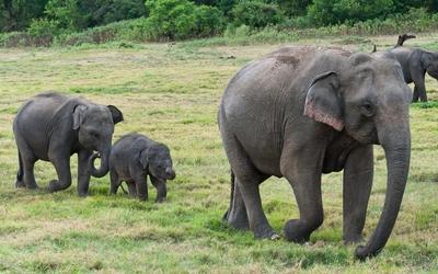 Cute elephant calves wallpaper
