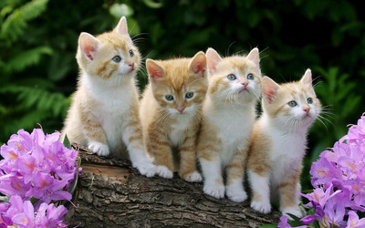 Cute ginger kittens on a tree log wallpaper