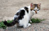 Cute kitten on the floor wallpaper 1920x1200 jpg