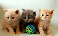 Cute kittens [2] wallpaper 1920x1200 jpg