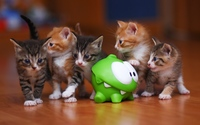 Cute kittens wallpaper 3840x2160 jpg