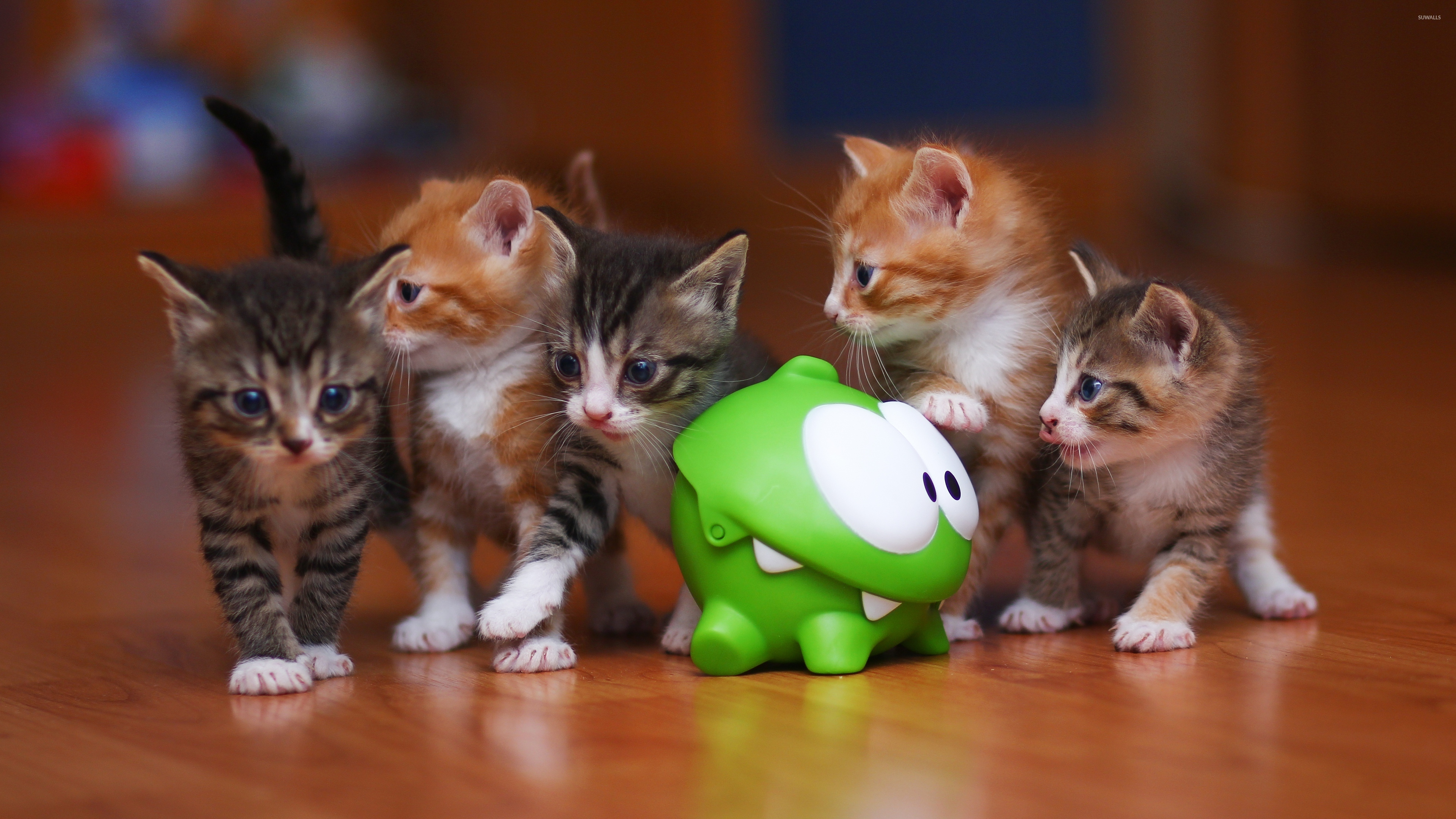 Cute kittens wallpaper animal wallpapers 39942 cute kittens wallpaper thecheapjerseys Gallery