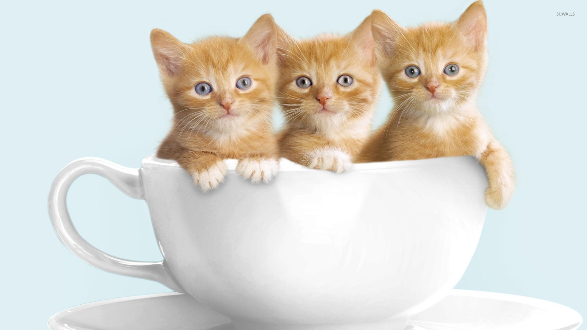 cat years in human years