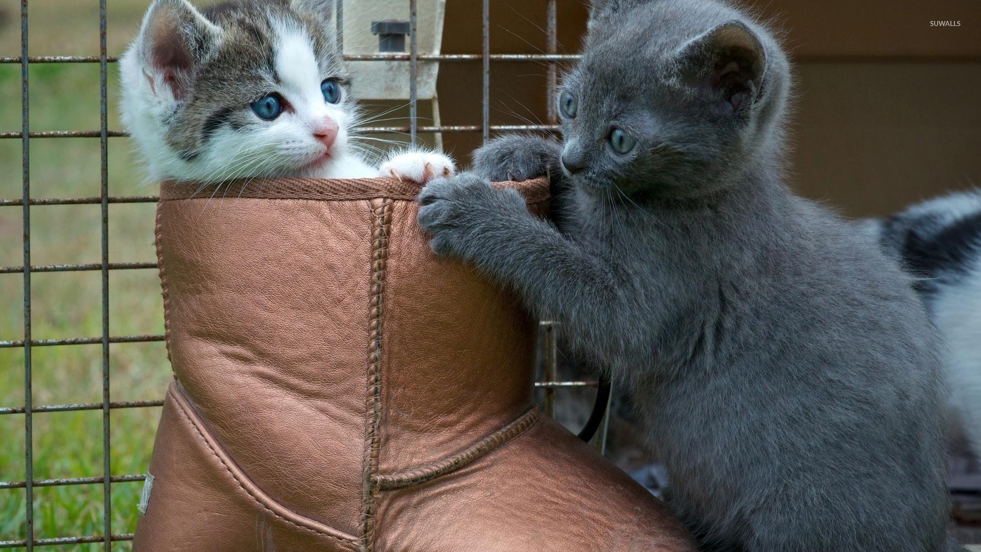 Cute kittens playing wallpaper Animal wallpapers