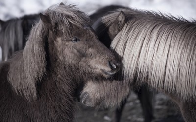 Cute ponies wallpaper
