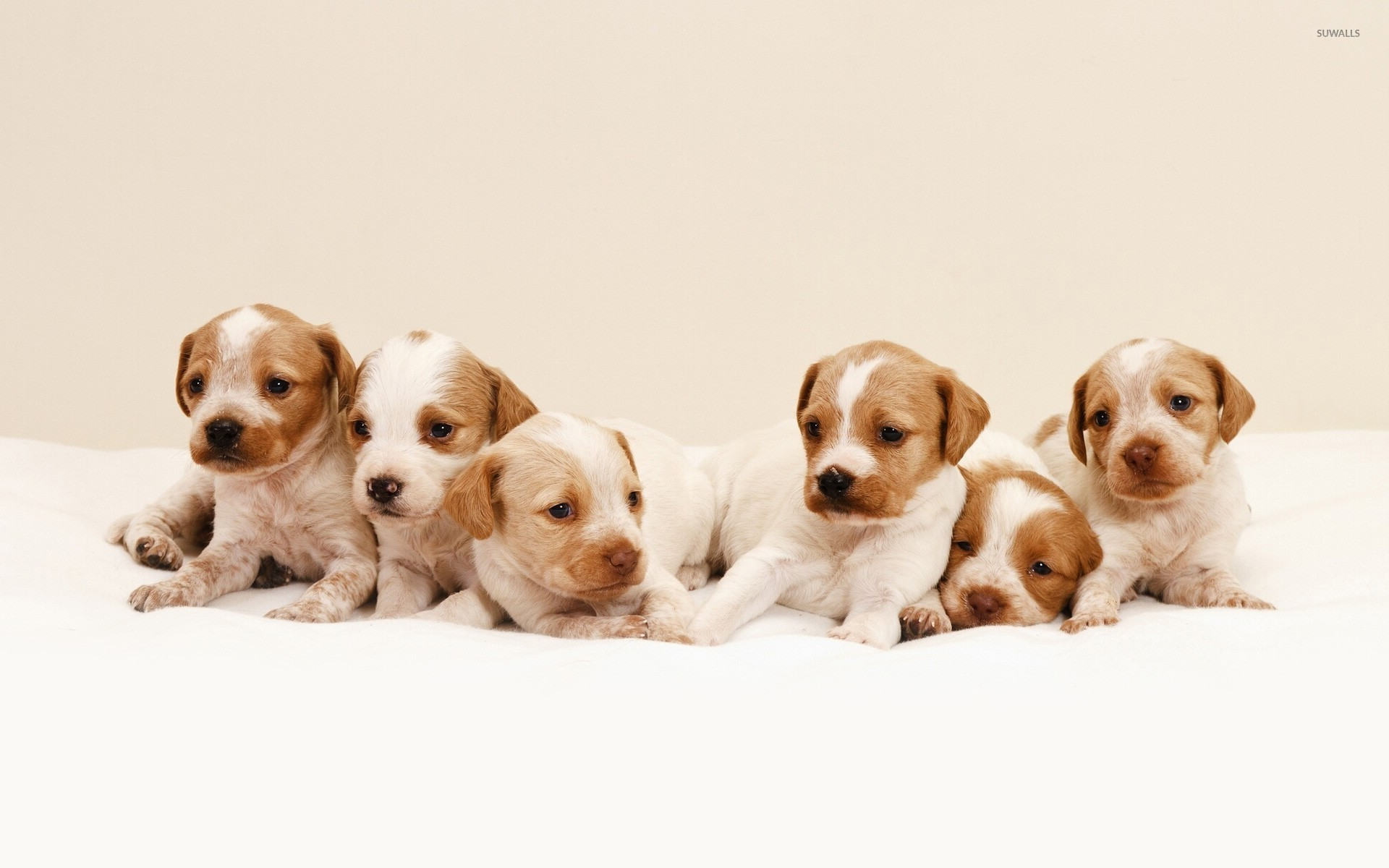 cute puppies wallpaper animal wallpapers 24770