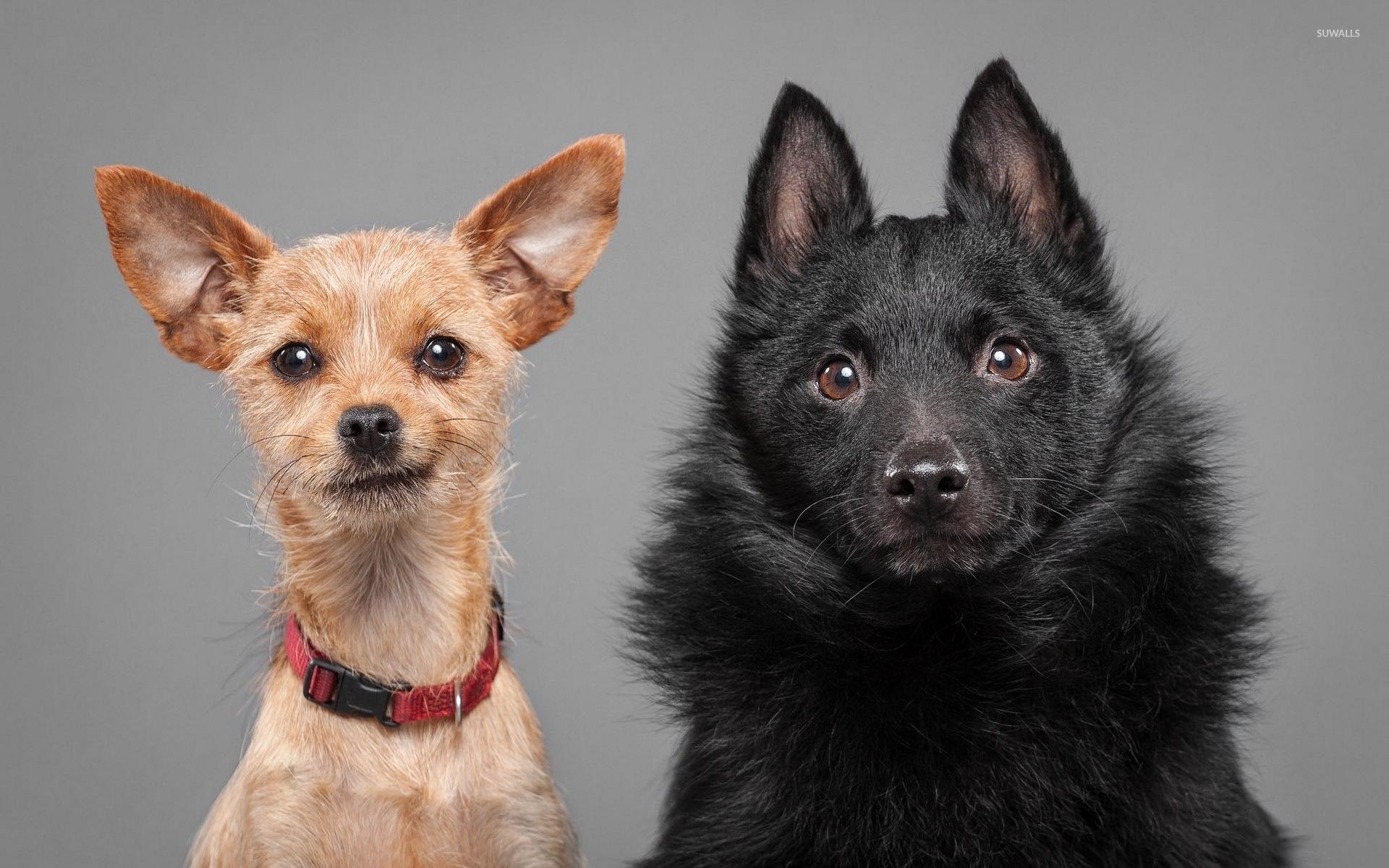 cute puppies [3] wallpaper - animal wallpapers - #46944