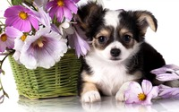 Cute puppy [2] wallpaper 2560x1600 jpg