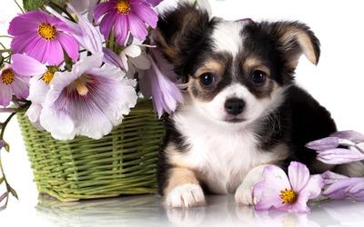 Cute puppy [2] wallpaper