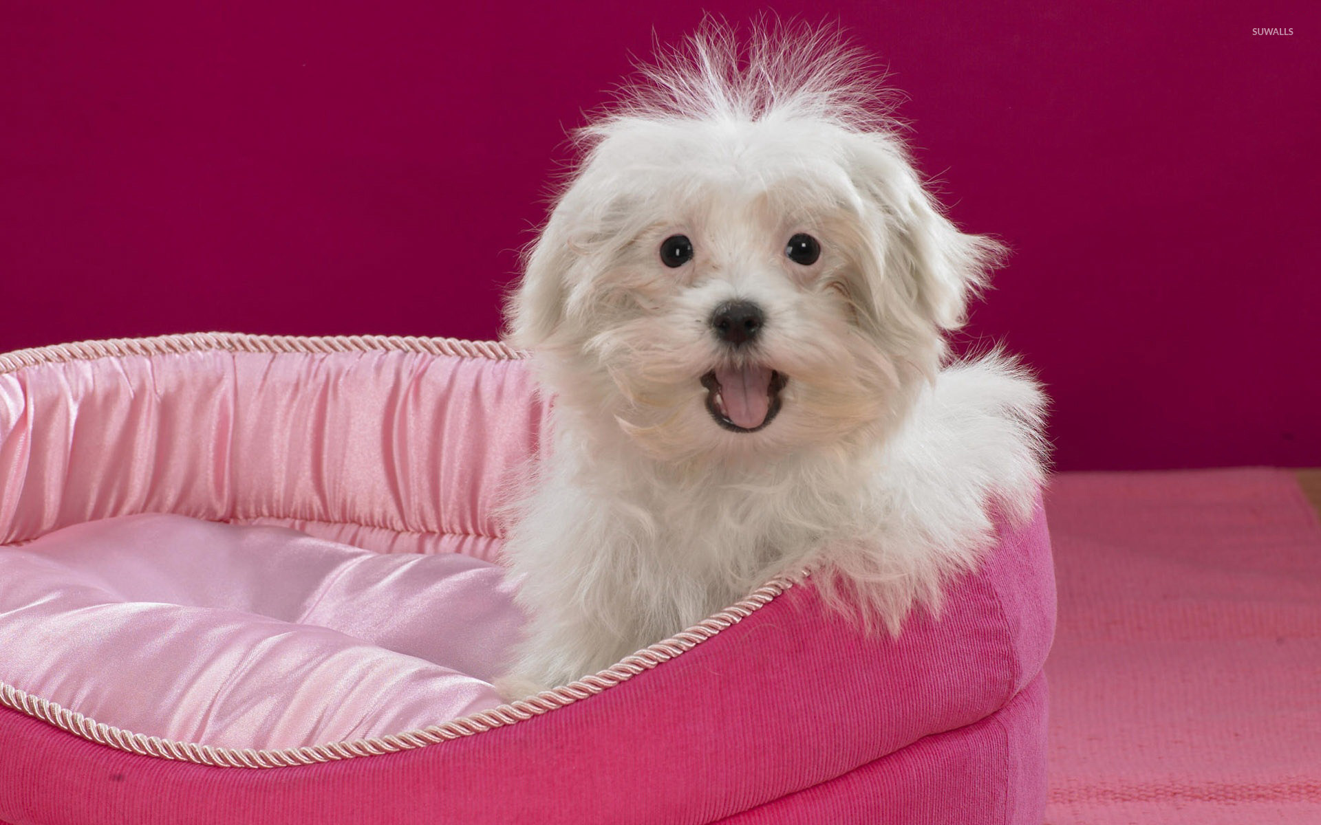 Cute Puppy 4 Wallpaper Animal Wallpapers 41153
