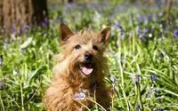 Cute puppy [6] wallpaper 1920x1200 jpg