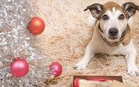 Cute puppy near Christmas decoration wallpaper 1920x1080 jpg