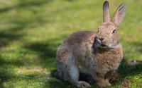 Cute rabbit wallpaper 1920x1200 jpg