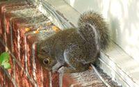 Cute squirrel [2] wallpaper 1920x1200 jpg