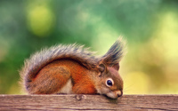 Cute squirrel wallpaper 1920x1200 jpg
