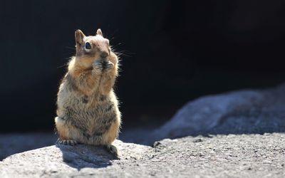 Cute squirrel [3] wallpaper