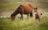 Dam with a cute foal wallpaper 1920x1200 jpg