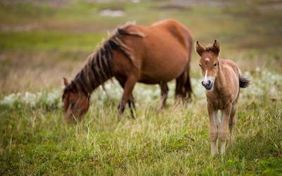 Dam with a cute foal wallpaper