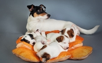 Dam with puppies wallpaper 2560x1600 jpg