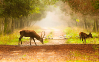 Deer [7] wallpaper 2560x1600 jpg
