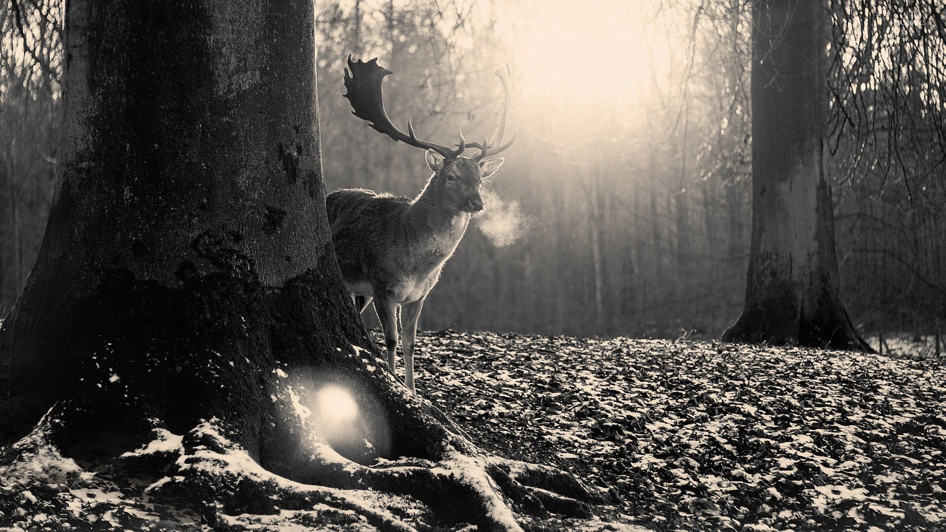 Cool Wallpaper Forest Deer - deer-in-the-forest-28627-1920x1080  Graphic_793939 .jpg