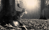 Deer in the forest wallpaper 1920x1080 jpg
