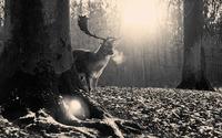 Deer in the forest wallpaper 1920x1080 jpg