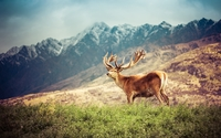 Deer on a green field by the mountains wallpaper 2560x1440 jpg