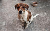 Dirty sad puppy wallpaper 2560x1600 jpg