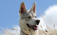 Dog [4] wallpaper 1920x1080 jpg