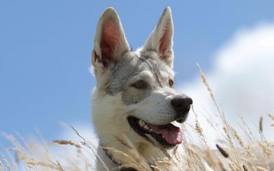 Dog [4] wallpaper